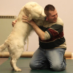 Dog trainer in Leicester positive methods