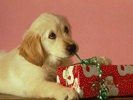 KDT Christmas Hampers for your Dog