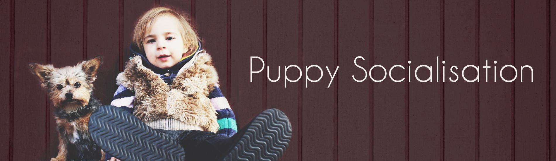 Puppy Socialisation slider