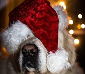 Dog training from Dec 2020