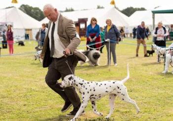 Andrew Pratt and Odin, the Dalmatian