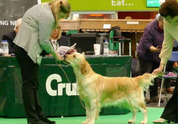 Lesley Layland and Betty, the Golden Retriever